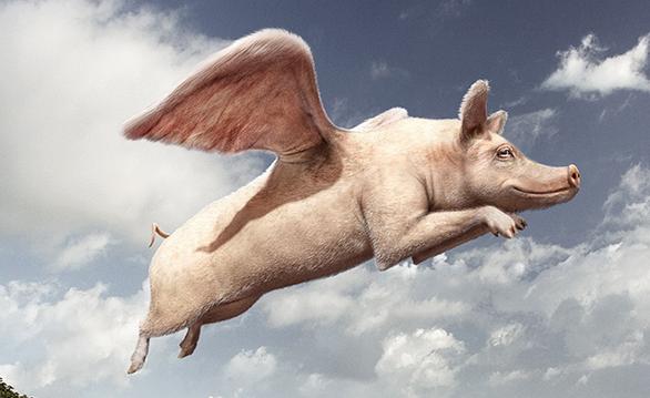 Le Cochon Casher Caché : le Porc Saint